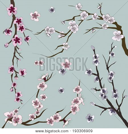 Set of realistic sakura japan cherry branch with blooming flowers. Nature background with blossom branch of pink sakura flowers.