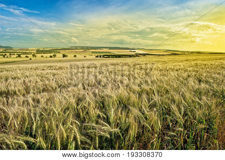 Summer Landscape with Wheat Field Before Sundown.