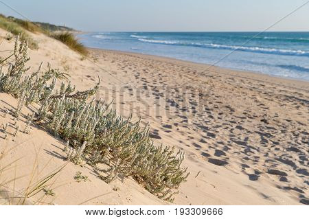 Sandy beach with a brier in Spain, Europe