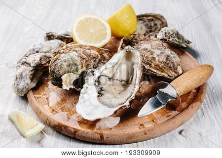 Raw open oysters on a wooden round board with slices of lemon and ice. Wooden light background