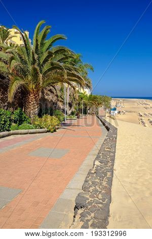 View on the street with green palm trees Atlantic ocean with green water beach with golden sand and blue sky in Morro Jable on the Canary Island Fuerteventura Spain.