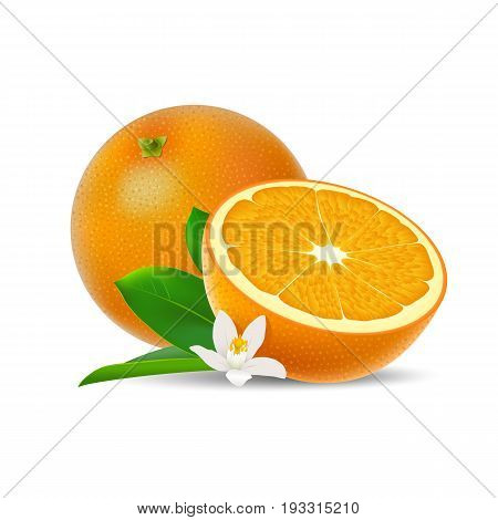 Isolated colored group of orange half and whole juicy fruit with white flower green leaf and shadow on white background. Realistic citrus