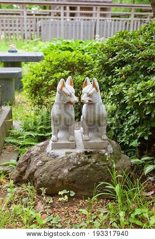 AKITA JAPAN - MAY 26 2017: Statues of two kitsune in Hachiman Akita Shinto Shrine on the grounds of Kubota Castle in Akita Japan. Kitsune is a fox shapeshifter and a servant of Inari goddess
