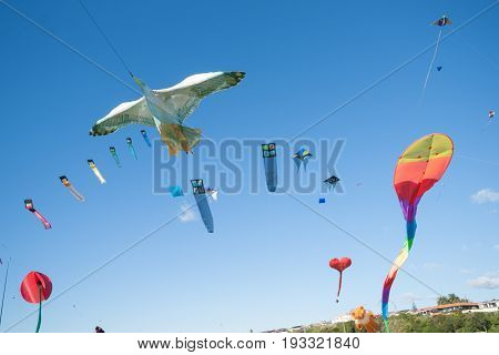 Kite flying day seagull kite surrounded by colourful array of flying objects Fergusson Park Tauranga New Zealand.