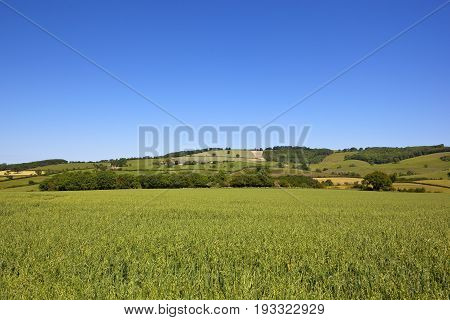 Oat Crop And Scenery
