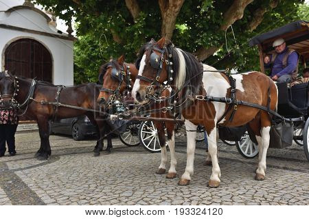 Horse Cart In Obidos, Portugal