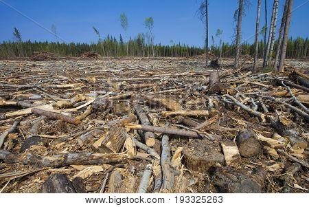 Trees felled during a logging operation in Saskatchewan Canada