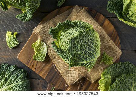 Raw Organic Savoy Cabbage Head