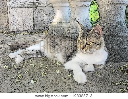 A resting cat on the background of baluster, art stylization of a picture