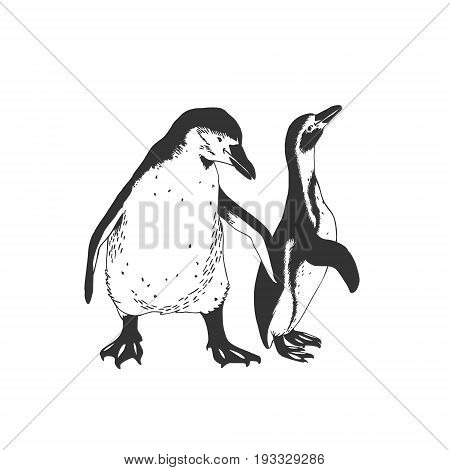 Couple Of Penguins. Vector Illustration