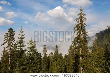 Clouds Float Clinging To The Tops Of Trees