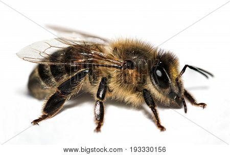 This is a Macro of a bee, insect, nature, animal, macro