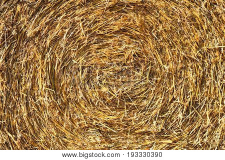 Yellow straw pressed in a round bale