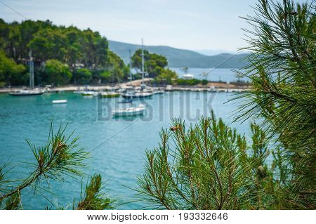 Beautiful View Through The Pine Trees On The Mediterranean Sea