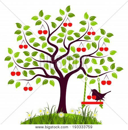 vector cherry tree with swing and bird with cherry isolated on white background