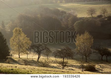 Trees In Spring At Sunrise