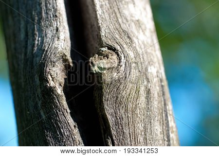 Old cracked tree trunk close up view