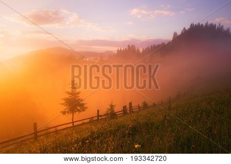 Mountain valley during sunrise. Amazing nature scene glowing by sunlight. Located place: Carpathians, Ukraine, Europe