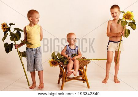Three cute nice boys in a village studio in the summer with sunflowers