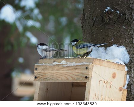 Two small birds sitting on the top of birdhouse looking for food