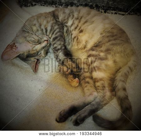 A cute cat sleaping on warm plaid in cute pose