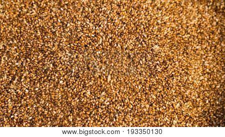 Farrow Grains Wheat Whole Raw Food Source