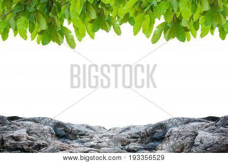 Natural green leaf on white background. element