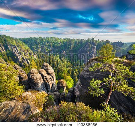 Misty Morning On Sandstone Cliff In Saxony Switzerland