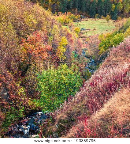 Colorful Autumn Forest In Caucasus Mountains Used As Background.