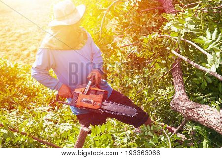 Lumberjack cutting a branch . working in a forest