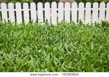 Beautiful green garden at home stock photo