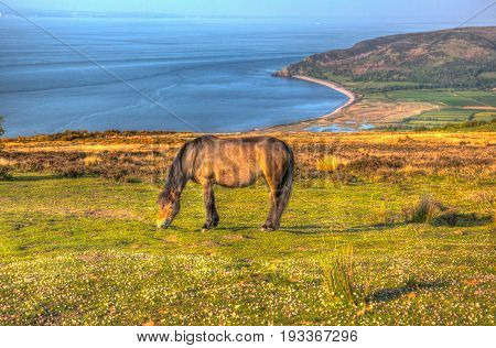 Exmoor national park view with pony towards Porlock Somerset coast in summer in hdr