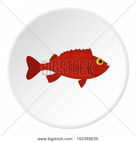 Red betta fish icon in flat circle isolated on white background vector illustration for web