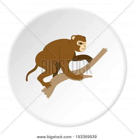 Monkey sitting on a branch icon in flat circle isolated on white background vector illustration for web