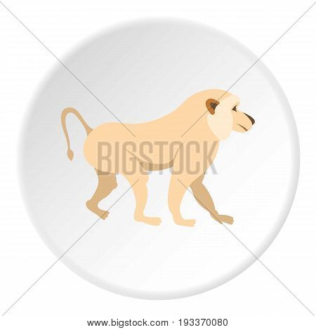 Japanese macaque icon in flat circle isolated on white background vector illustration for web