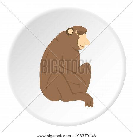 Orangutan monkey icon in flat circle isolated on white background vector illustration for web