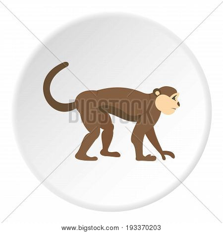 Macaque monkey icon in flat circle isolated on white background vector illustration for web