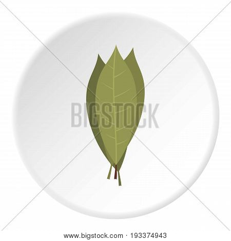 Bay laurel leaves icon in flat circle isolated on white background vector illustration for web
