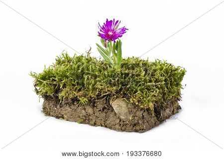 Plate of ground and grass with flower photographed in studio on white background