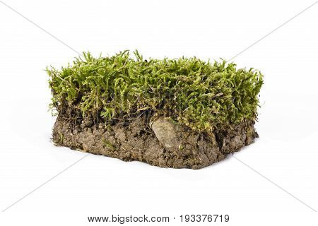 Plate of ground and grass photographed in studio on white background