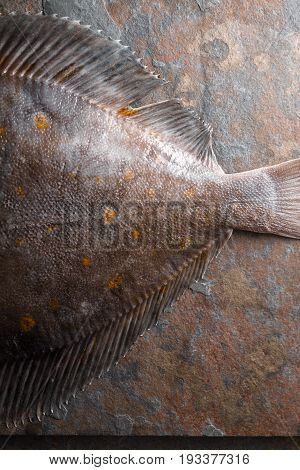 Raw flounder fish on the stone background top view  vertical