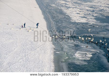 Family watch swans and ducks in the frozen Danube river from the frozen beach. Novi Sad, Serbia. Winter image.