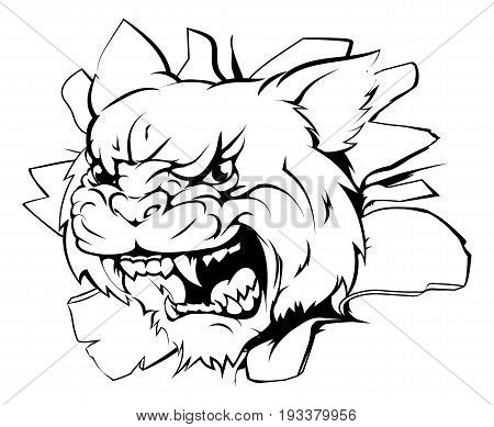 A wildcat sports mascot or character breaking out of the background or wall