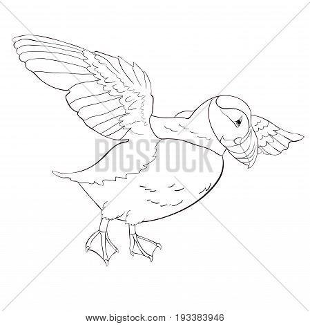 Bird Deadlock Australian Atlantic In Flight. Vector Illustration