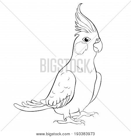 Coloring Corella Nymph Parrot Cockatoo Family. Vector Illustration