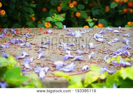 Purple Jacaranda Blossoms On Stone Wall