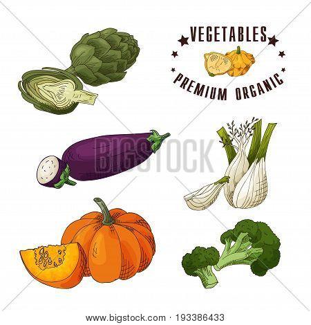 Vector vegetable element of artichoke, eggplant, fennel, pumpkin, broccoli. Hand drawn icon with lettering. Food illustration for cafe, market, menu design.