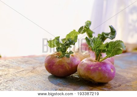 Fresh White And Purple Turnips With  Green Leaves