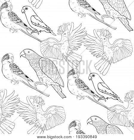 Seamless Pattern Coloring Jaco, Lovebird, Wavy Parrot Kakadu. Vector Illustration