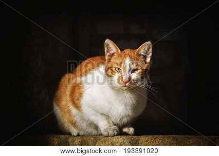 Image of the Stray Cat over the Dark Background